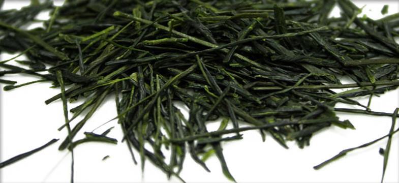 O chá verde Sencha