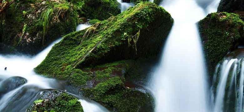 Chá verde contra a cistite crônica