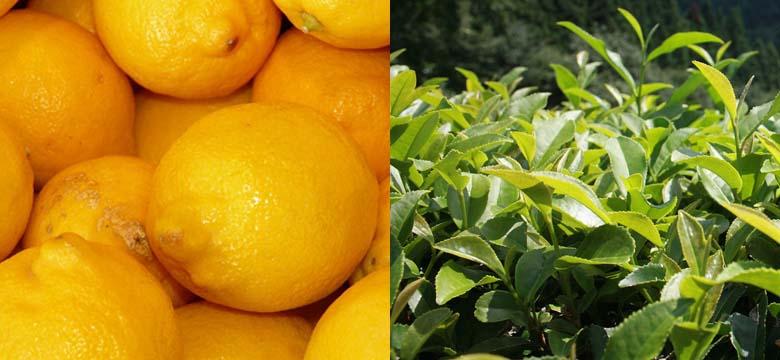 O chá verde e a vitamina C