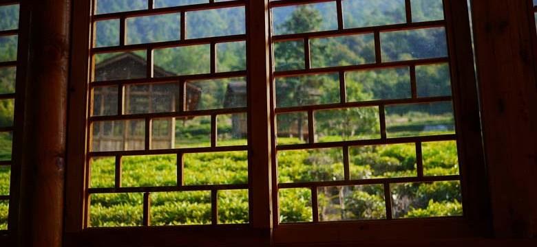 O chá verde inibe a absorção de ferro?