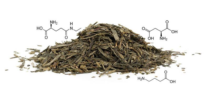 Aminoácidos e L-teanina nos chás verde e branco
